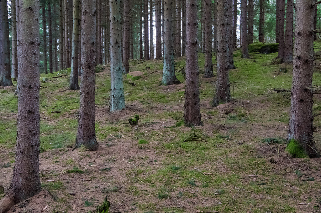 2014-Spring-at-Bogesund-3.jpg