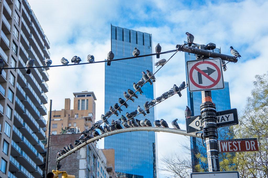 2014-New-York-Street-C-18.jpg