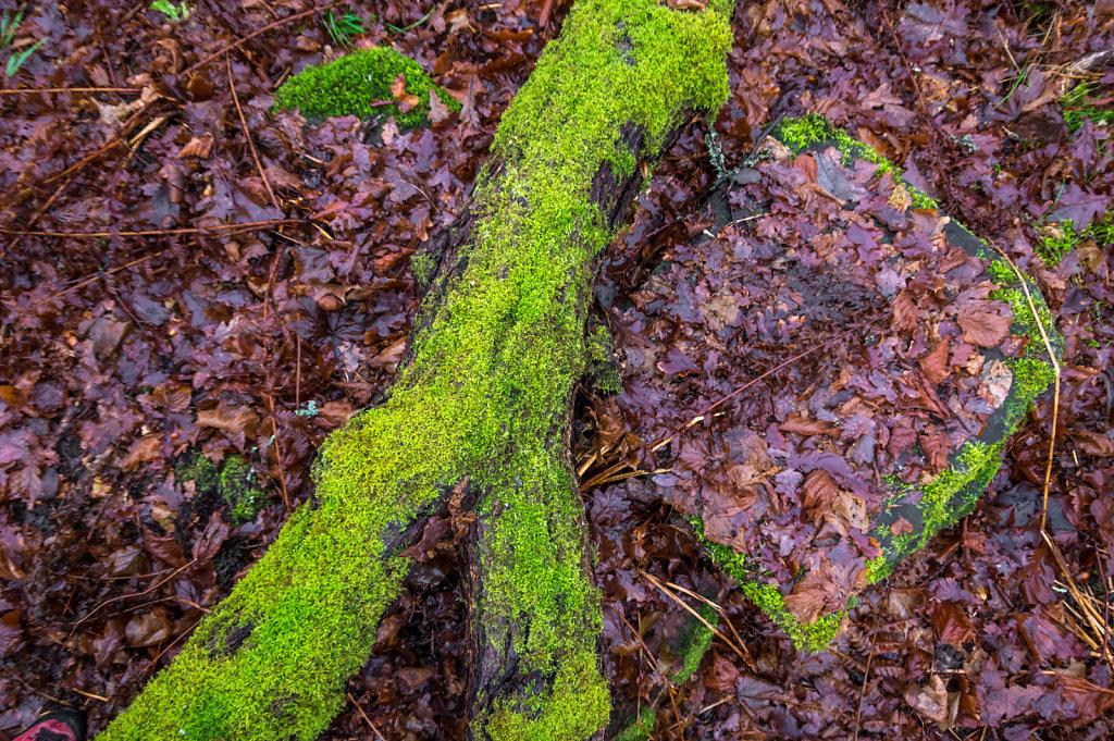 Green moss 2