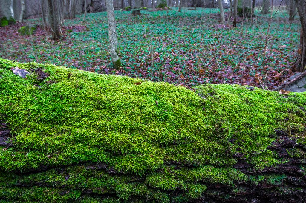Green moss 1