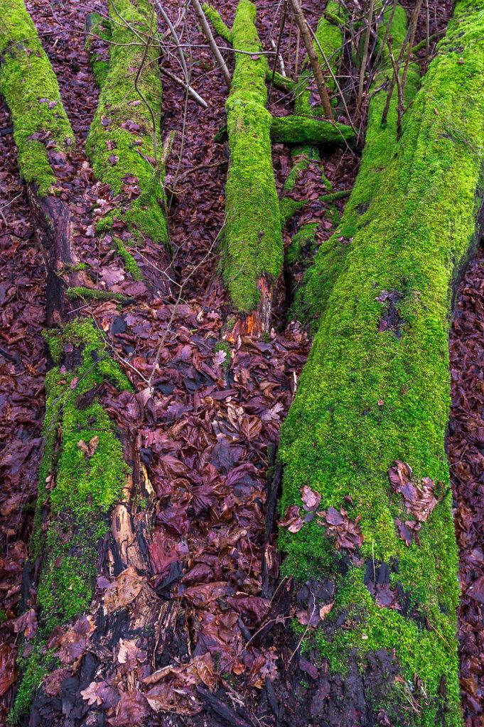 Green moss5