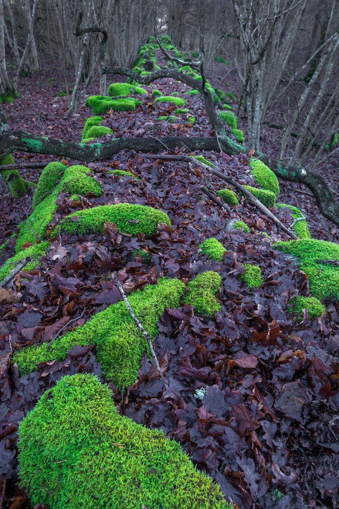 Green moss 6