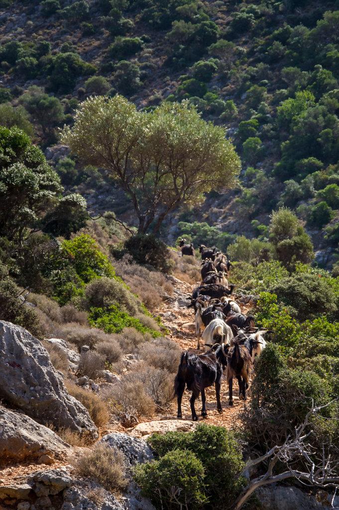 Trångt på stigen vid Akrotiri