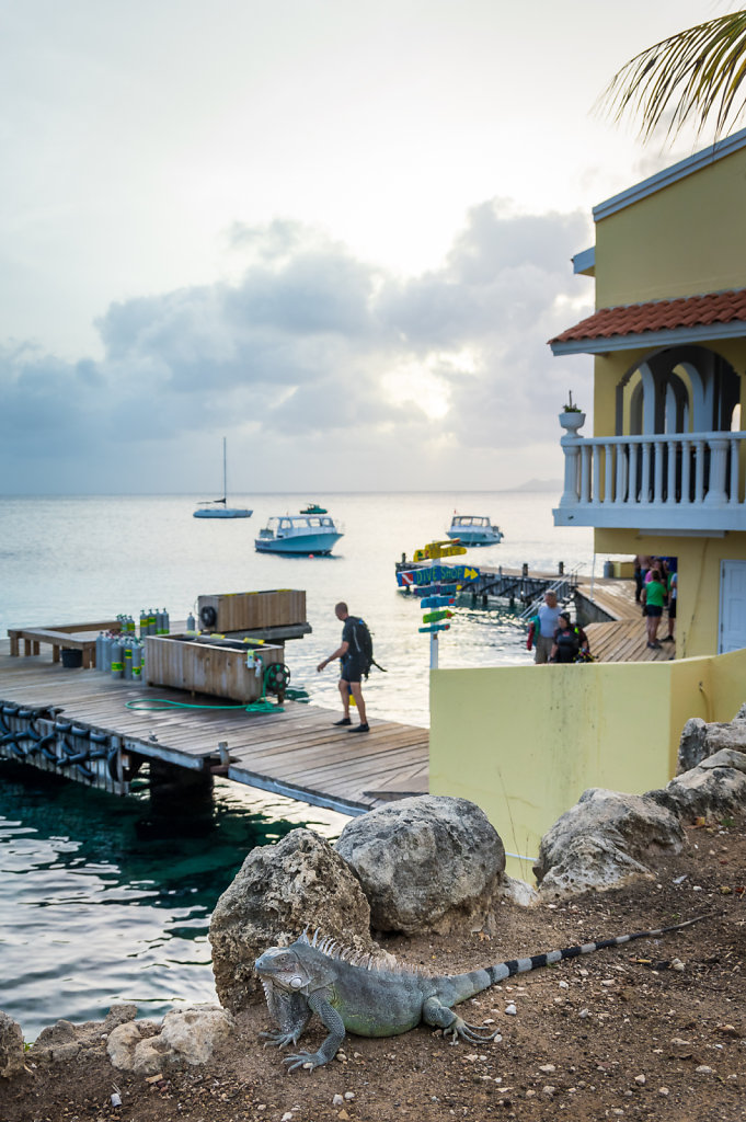 2016-Bonaire-5.jpg